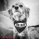 Tampa-Charity-charlie