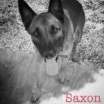 tampa-charity-saxon